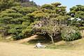 Tomuhle se říká polední siesta po Japonsku - lehnout si pod rozkvetlou sakuru ...
