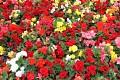 Kvetoucí Holandsko je nádherné a skýtá mnoho možností ... Pojďme tedy vyrazit na malý a objevný výlet ...