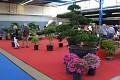 Nádherné bonsaje nechybí na žádné KOI show - jsou nepostradatelnou součástí každé japonské zahrady ...