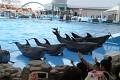 Slušností je se vždy představit, vědí to i delfínci, a jdeme na to ...