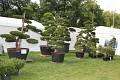 Koupit můžete krásný exemplář do zahrady ...