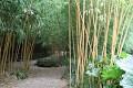Vezměme to zkratkou přes bambusový háj ...