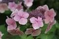 Vždyť květy jsou úžasné - matky příroda si ale dala práci ... ...