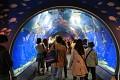 Už vstupní tunel se žraloky se nádherný  ...
