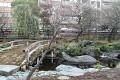 Japonské zahrady jsou okouzlující, obvzláště v rušných ulicích ...