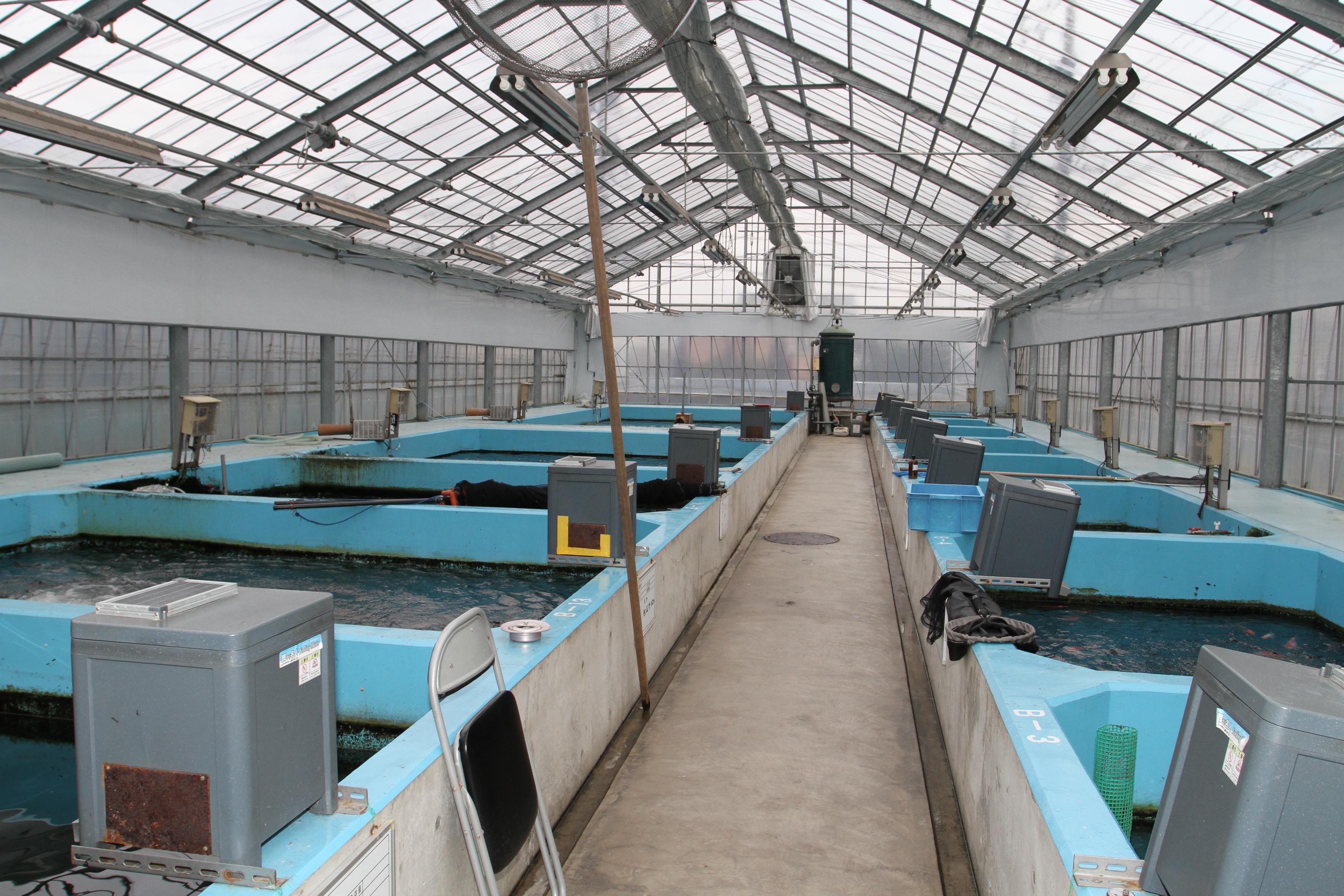 KONDO FISH Farm