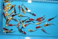 Tosai Long Fin Butterfly Mix 12-15cm