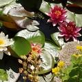 Filtrace BioSieve = kompaktní a funkční řešení  filtrace pro zahradní jezírka