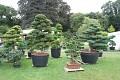 Budete očarováni krásnými tvarovanými stromy ...