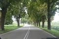 Holanďané si váží zeleně a neničí nesmyslně stromy kolem silnic, kvůli pár pirátům silnic ...