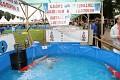 Nejúspěšnější výstavní bazén - Grand Champion A, B, Mature i Supreme - zřejmě dobrý oddíl ...
