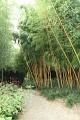 ... a po takové jízdě to chce relax - tak co třeba uklidňující procházka bambusovým hájem ...
