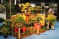 KOI výstava je tradičně doplněna i o výstavu bonsají ...