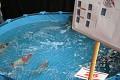 Bazén šampionů, ale jak můžete vidět - není nic vidět - kapři, jsou spokojení a vytírají se ...