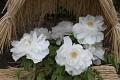 A mají nádherné květy v nejrůznějších barvných variací...