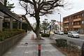 Japonci přírodu milují a umí si ji vážit - v Čechách by tento strom ihned porazili - překážel by chodcům, tady nikomu nevadí, obejdou ho a nemají s tím sebemenší problém, nikdo nepíše petice za odstranění ...