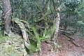 Chrámové komplexy jsou rozsety na úpatí zalesněných hor - cedrové lesy jsou temné a místy neprostupné ...