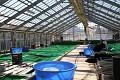 Dainichi KOI Farm ... je zbytečné mluvit o věhlasu těchto farem - stačí se podívat do jejich nádrží a tomu odpovídá i cena ...
