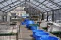 Hiroi KOI Farm ... Doitsu Otchiba, Gin Rin Showa a další oblíbené variety ...