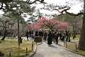 Japonci milují kvetoucí Sakury ... je jich tam více než kvítků na ní ...