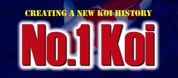 NO.1 KOI - Aukce nejlepších KOI