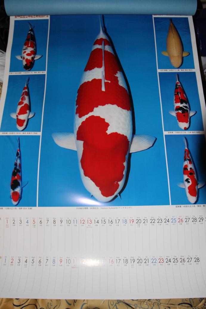 Oficiální ZNA nástěnný kalendář s KOI šampióny 2013
