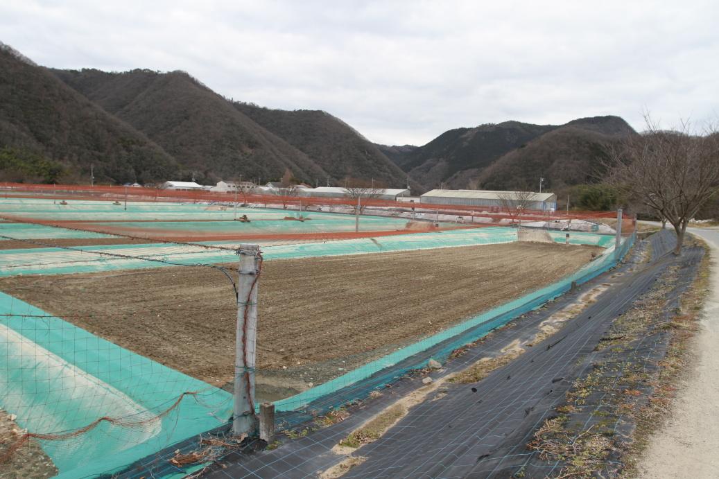 Momotaro KOI farm 2015