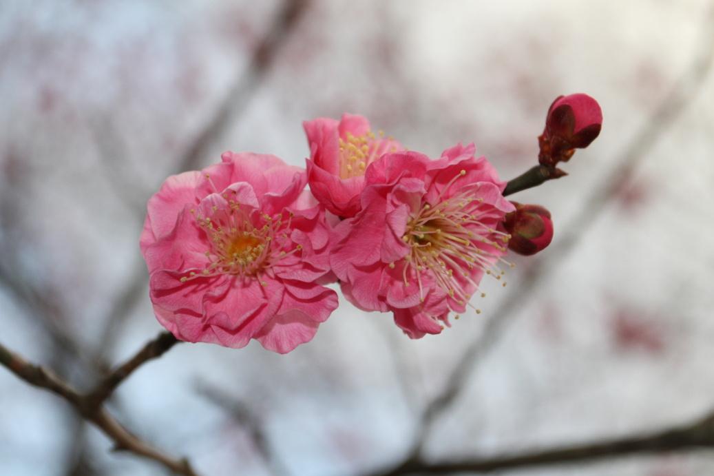 Kyoto February 2015