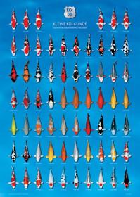 Plakát KOI 66