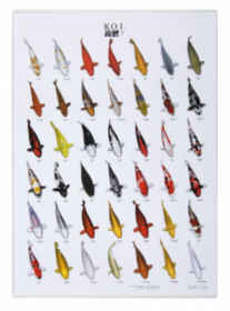 Plakát KOI č. 2 / 21 x 29 cm