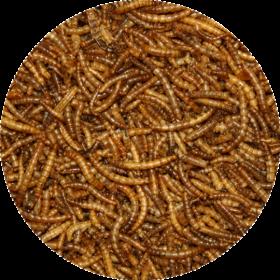 Mouční červi Mealwormen