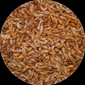 Sušený hmyz Gammarus