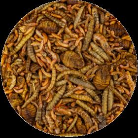 Sušený hmyz KOI Treats Mix