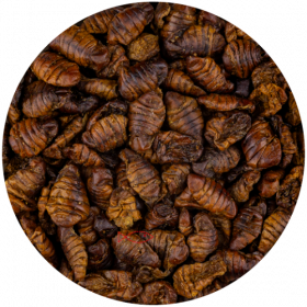 Bourec morušový Silkworms